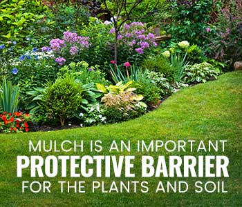 Why Mulch is Important in a Garden