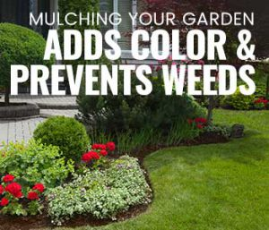 Which Mulch is Best to Prevent Weeds?